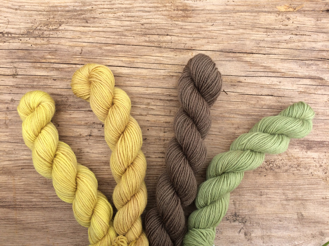 Four skeins of yarn dyed with Dock
