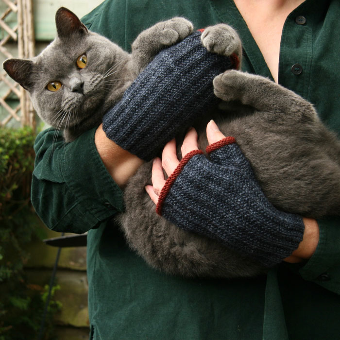 A pair of hands wearing blue mittens with red edges and holding a disgruntled grey cat called Bertie